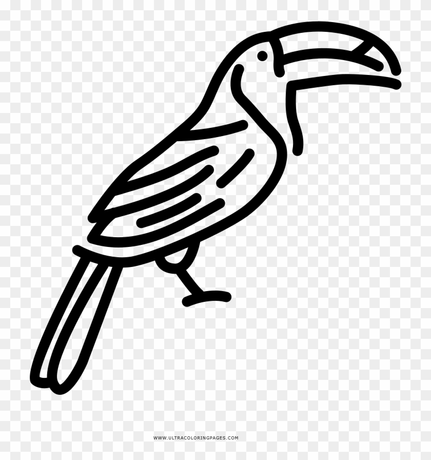 Toucan 01 Coloring Page | Coloring Page Central | 896x840