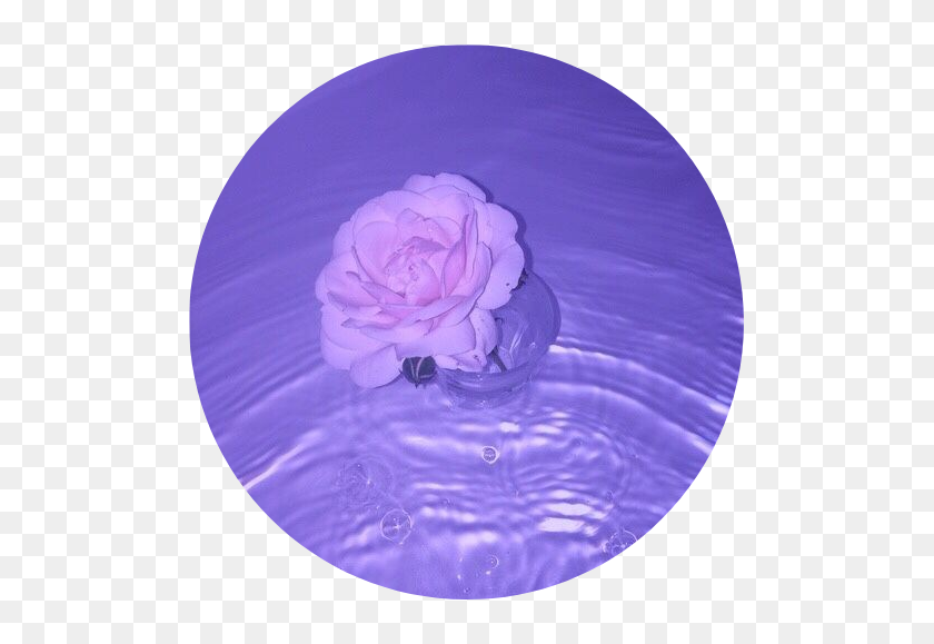 Purple Aesthetic Tumblr Rose Roses Water Pastel
