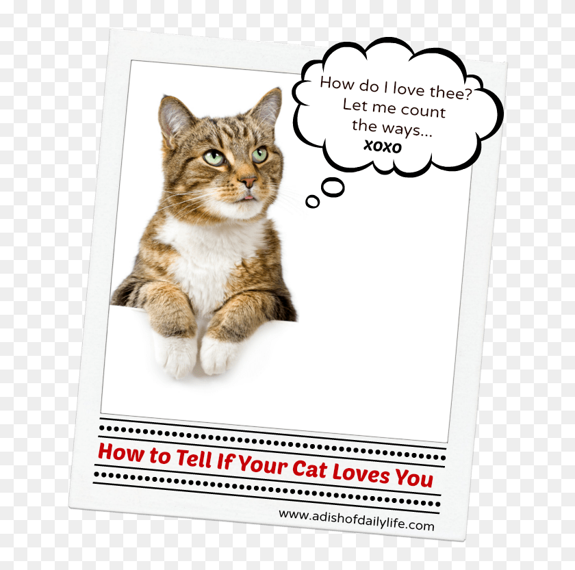 How To Tell If Your Cat Loves You Sign If You Love Cats Hd Png Download 650x759 4642979 Pinpng