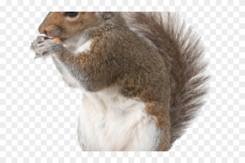 Transparent Background Squirrels Png, Png Download - 640x480