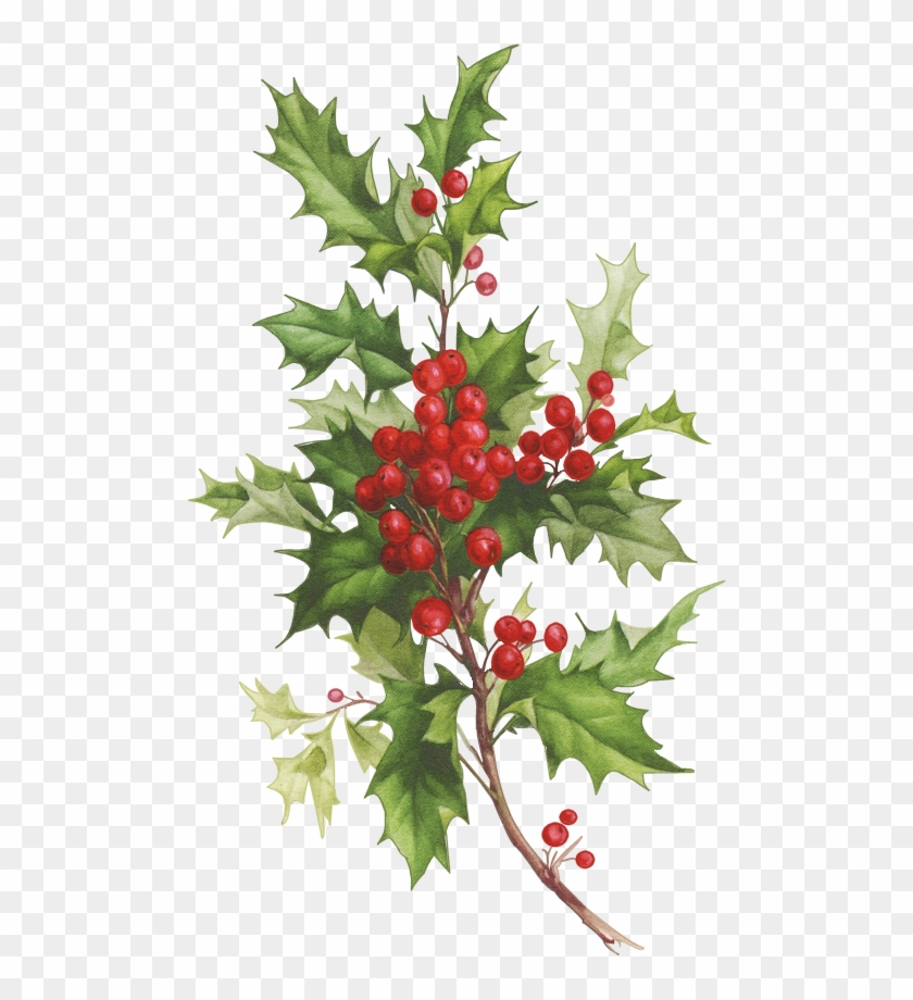 Christmas Holly Clipart Png.Christmas Holly Clip Art Christmas Holly Watercolor Png