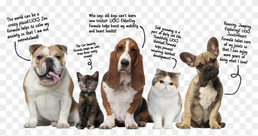 Pets Talking Graphic R1 Bold You A Dog Or Cat Person Hd Png Download 1000x493 919317 Pinpng
