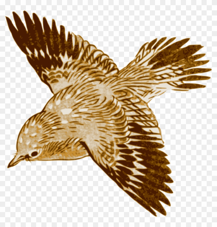 Free Png Download Flying Brown Birds Png Images Background Brown Bird Flying Clipart Transparent Png 850x848 982517 Pinpng